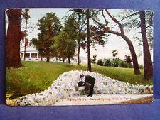 Postcard PA Philadelphia Natural Spring Willow Grove