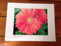 Modern Abstract Dreamy Gerbera Daisy Digital Drawing Print Pro Matted Deb Booth
