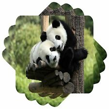 Pandas Set of 4 Square Coasters Bar Table