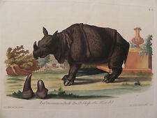 Rinoceronte Knorr Eisenmann Keller Rhinoceros Rhino acquaforte originale 1770