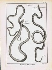 Snakes-Verdatre-Petaleire 1789 Bonnaterre Engraving