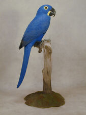Hyacinth Macaw Original Wood Carving