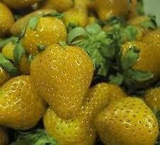 Erdbeeren 25 Samen *GELBE ERDBEERE* Vanille & Ananas Geschmack - absolut TOP!