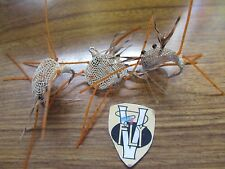 3 V Fly Size 6 Ultimate Alphonse Weed Guard TAN Flexo Sand Crab Saltwater Flies