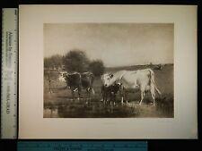 Rare Antique Original VTG Cattle In The Open Ogden Wood Photogravure Art Print