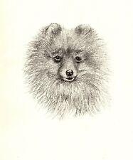1935 Antique Pomeranian Dog Print Vintage C F Wardle Dog Pet Print Cfw 3995e
