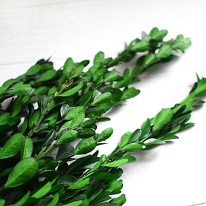 Preserved Buxus Sinica Eternal Small Leaves,Dried Natural Fresh Forever Boxwood
