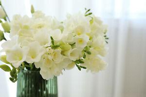 20 Freesia Double WHITE Summer Flowering Bulbs Wedding Garden Fragnant CutFlower