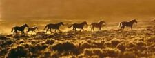 Red Desert Sunrise by Claude Steelman Horses Desert Print 34x14.5