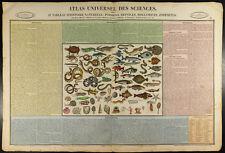 1837 - Zoologie : Gravure ancienne en couleurs. Poisson, reptile, mollusque