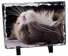 Cat in Ecstacy Photo Slate Christmas Gift Ornament, AC-3SL