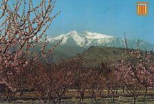 BF19766 le canigou au printemps parmi les pecheraen fleu france front/back image