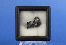 Russian Meteorite, Sikhote-Alin Shrapnel Collectible