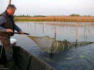 Aal Wildfang 1Kg Steinhuder Räucheraal Räucherfisch Rauch aal Fische geräuchert