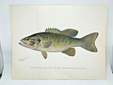 Original Antique Denton Fish Print Smallmouth Bass
