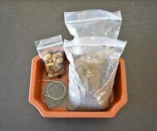 """Bonsai Potting Kit, 6.25"""" Bonsai Pot Included Plastic Pot Everything for Bonsai"""