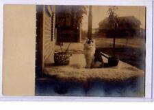 Real Photo Postcard Rppc - Long Hair Cat on Porch - Animal