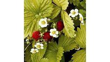 1000 Samen Erdbeere - Holz Alexandria Parfümiert süß