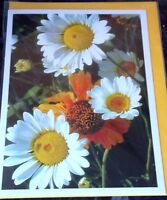 Packs of 3 Blank Cards by Hazel Burrows. 3 Flower Themes per pack.