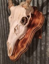 European Deer Skull Mount Wall / Table Pedestal Plaque Burned Pine