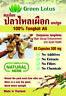 Natural Tongkat Ali 100% - 180 capsules 500mg - Eurycoma longifolia - Longjack