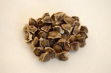50 Moringa oleifera keimfähige Samen Moringasamen Fair gehandelt