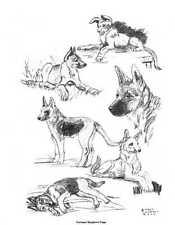 German Shepherd Pups - 1962 Vintage Dog Print - G. Cook