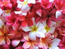 10 MIXED COLORS PLUMERIA Seeds - Lei Flower Frangipani Mix Pink Red Yellow White