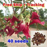 Rare 40 pcs Red Sesbania Grandiflora Agasta Humming Bird Butterfly Vegetable