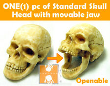 Hot Custom 1/6 Scale Toys Skull Head with Movable Jaw ** Handmade Item **