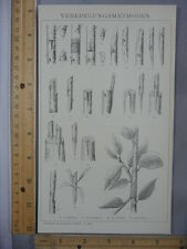 Rare Antique Orig VTG Veredelungsmethoden Plant Process Illustration Art Print