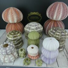 All Varieties Sea Urchins Bulk Packs Wedding Decor Coastal Beach Craft Air Plant