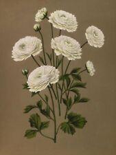 White Realism Botanical Art Prints
