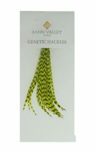 Metz Genetic Hackles Cock Neck Grizzle Dyed Chartreuse Average Sizes 16-10s