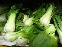 Kanton Pak Choi - 150 Samen -  Brassica Rapa Chinensis BLATTKOHL