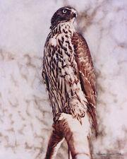 Goshawk POSTCARD Bird of Prey Painting Steve Greaves Art Watercolour Wildlife