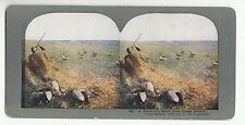 """[50657] 1898 STEREOVIEW No. 482 """"A MORNING'S SPORT"""" (T.W. INGERSOLL COPYRIGHT)"""