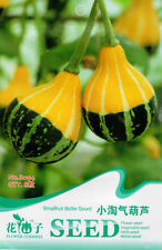 10 Original Pack Seeds Smallfruit Bottle Gourd Seeds Calabash Organic B094