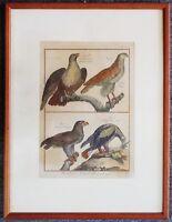 """Kupferstich Adler,""""L'Aigle des Indes, L'Aigle féroce..."""",Benard 1770, coloriert"""