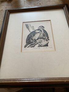 """Falconets"" Linda Lloyd New Orleans Etching 1/100, Louisiana pencil signed"
