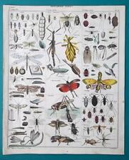 Insect Scorpio Fly Earwig Cicada Lantern Fly Grasshopper - 1843 Hc Color Print
