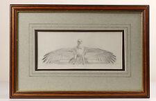 John Cyril HARRISON | fine ORIGINAL pencil sketch | young GOLDEN eagle | 'Fury'