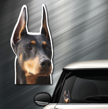 "(1) Doberman Dog Peeper Sticker Window Peep Decal Car Auto Puppy Akc 3.75""x7.4"""