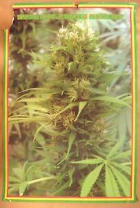 "Vintage 1994 Marijuana Poster Cannabis Save the Brain Forest Measures 36"" x 24"""