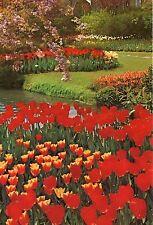 Alte Postkarte - Vogelenzang - Tulipshow