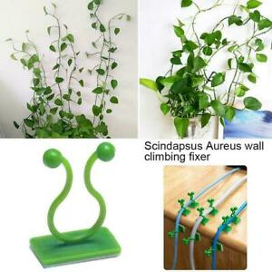 Plant Climbing Wall Clip Invisible Wall Vines Fixture Wall Sticky Hook Z7I5