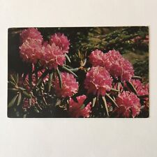 Purple Rhododendron Appalachian Mountains Postmark Johnson City 1970 Postcard