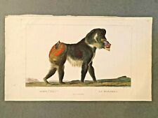 1801 Original Hand Colored Etching - Cuvier & Saint-Hilaire - Mandrill Plate #2