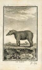 1769 TAPIR Antique Copper Plate Engraving Print BUFFON