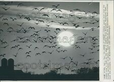 1967 Canada Geese Silhouettes Fly in Sunset Bombay Hook Refuge DE Press Photo